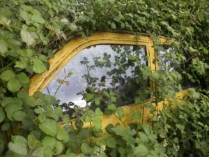 Car in Bushes