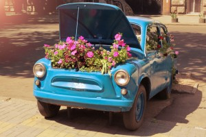 Blue Flower Car