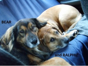 Bear and Ralphi
